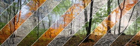 Όμορφη σκηνή πρωινού στο δάσος, αλλαγή τεσσάρων εποχών Στοκ Φωτογραφίες