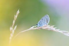 Όμορφη σκηνή φύσης με την πεταλούδα Στοκ Φωτογραφίες