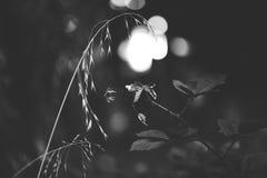 Όμορφη σκηνή φύσης σε γραπτό Στοκ εικόνα με δικαίωμα ελεύθερης χρήσης