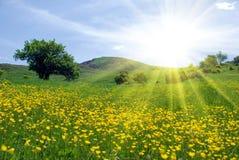 όμορφη σκηνή φύσης στοκ εικόνες