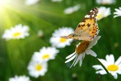 όμορφη σκηνή φύσης στοκ φωτογραφία με δικαίωμα ελεύθερης χρήσης