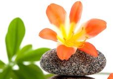 όμορφη στενή πέτρα λουλουδιών επάνω Στοκ Φωτογραφίες