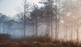 Όμορφη στιγμή του πρωινού Στοκ Εικόνα