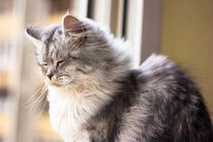 Όμορφη συνεδρίαση γατών σε ένα windowsill και κοίταγμα Στοκ Εικόνες