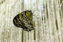 Όμορφη συνεδρίαση πεταλούδων σε μια κουρτίνα των χαντρών Στοκ Εικόνες