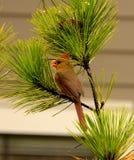 Όμορφη συνεδρίαση πουλιών στον κλάδο Στοκ Εικόνες