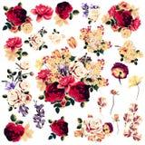 Όμορφη συλλογή των διανυσματικών ροδαλών λουλουδιών Στοκ Εικόνα
