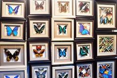 Όμορφη συλλογή των πεταλούδων Στοκ εικόνα με δικαίωμα ελεύθερης χρήσης