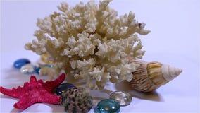 Όμορφη σύνθεση για το ντεκόρ του κοραλλιού, του χρωματισμένων γυαλιού και των κοχυλιών απόθεμα βίντεο