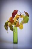 όμορφη σύνθεση φθινοπώρο&upsilon Στοκ Εικόνες