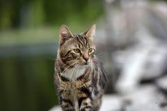 Όμορφη τιγρέ γάτα υπαίθρια στοκ φωτογραφία με δικαίωμα ελεύθερης χρήσης