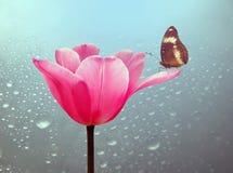 Όμορφη τουλίπα με την πεταλούδα Στοκ Εικόνες