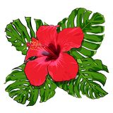 Όμορφη τροπική ανθοδέσμη λουλουδιών Στοκ φωτογραφίες με δικαίωμα ελεύθερης χρήσης