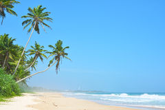 Όμορφη τροπική παραλία με καμία, τους φοίνικες και τη χρυσή άμμο Ρόλος κυμάτων στην παραλία με τον άσπρο καθαρό αφρό μπλε θάλασσα Στοκ Φωτογραφία