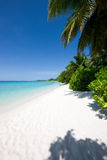 Όμορφη τροπική παραλία με τα δέντρα Στοκ εικόνα με δικαίωμα ελεύθερης χρήσης