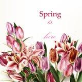 Όμορφη υπόβαθρο ή απεικόνιση με τα λουλούδια τουλιπών Στοκ εικόνες με δικαίωμα ελεύθερης χρήσης