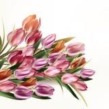Όμορφη υπόβαθρο ή απεικόνιση με τα λουλούδια τουλιπών Στοκ φωτογραφία με δικαίωμα ελεύθερης χρήσης