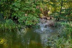 Όμορφη υψηλή πηγή στη λίμνη κήπων Ειδυλλιακή εικόνα του πράσινου νερού, των κόκκινων ψαριών και των όμορφων εγκαταστάσεων γύρω απ στοκ φωτογραφία με δικαίωμα ελεύθερης χρήσης