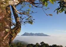 Όμορφη υδρονέφωση, βουνό και δέντρο σκηνής ο φ Στοκ φωτογραφίες με δικαίωμα ελεύθερης χρήσης