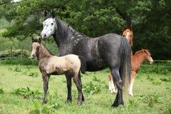 Όμορφη φοράδα με foal Στοκ Εικόνα