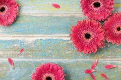 Όμορφη φυσική ευχετήρια κάρτα λουλουδιών μαργαριτών gerbera για το υπόβαθρο ημέρας μητέρων ή της γυναίκας Τοπ όψη κόκκινος τρύγος στοκ εικόνα