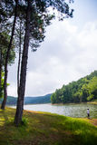 Όμορφη φυσική σκηνή του δάσους και της λίμνης πρασινάδων Στοκ φωτογραφία με δικαίωμα ελεύθερης χρήσης