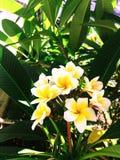 Όμορφη φυσική φωτογραφία λουλουδιών Στοκ εικόνα με δικαίωμα ελεύθερης χρήσης