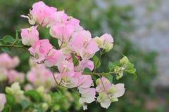 όμορφη φωτογραφία εγγράφου λουλουδιών πολύ Στοκ Εικόνα