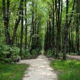 όμορφη φωτογραφία πάρκων μονοπατιών πολύ Στοκ εικόνες με δικαίωμα ελεύθερης χρήσης
