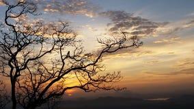 Όμορφη φωτογραφία φύσης της Σρι Λάνκα στοκ εικόνα