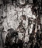 Όμορφη φύση κινηματογραφήσεων σε πρώτο πλάνο κατασκευασμένη του παλαιού ξύλινου υποβάθρου Φλοιός β Στοκ εικόνα με δικαίωμα ελεύθερης χρήσης