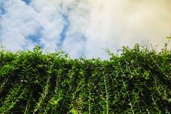 Όμορφη φύση με τα πράσινα φύλλα και φρέσκος ουρανός με το σύννεφο Στοκ Φωτογραφίες