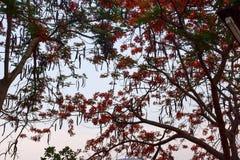 Όμορφη φύση με το δέντρο Στοκ Εικόνα