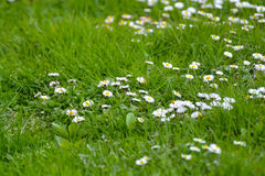 Όμορφη φύση, λουλούδια την άνοιξη Στοκ Εικόνες