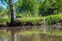Όμορφη φύση της Ρωσίας Δάση της Ρωσίας φροντίστε τη φύση 2 στοκ εικόνες