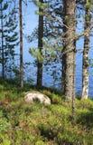 Όμορφη φύση της Φινλανδίας στοκ φωτογραφίες με δικαίωμα ελεύθερης χρήσης