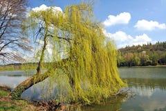 όμορφη φύση Στοκ Εικόνες