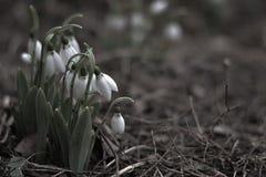 όμορφη φύση Στοκ εικόνα με δικαίωμα ελεύθερης χρήσης