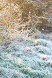 Όμορφη χειμερινή φύση με στενό επάνω χλόης Στοκ φωτογραφίες με δικαίωμα ελεύθερης χρήσης