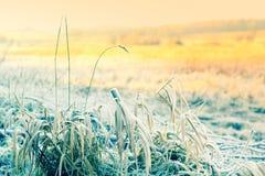 Όμορφη χειμερινή φύση με στενό επάνω χλόης Στοκ Εικόνα