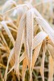Όμορφη χειμερινή φύση με στενό επάνω χλόης Στοκ Εικόνες