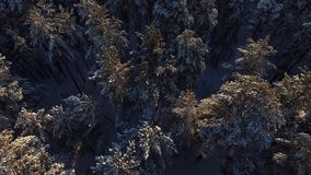 Όμορφη χειμερινή φύση της Σιβηρίας: κωνοφόρο χειμερινό δάσος, εναέριο φιλμ μικρού μήκους