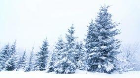 Όμορφη χειμερινή landscape απόθεμα βίντεο