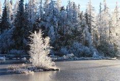 Όμορφη χειμερινή landscape Στοκ Φωτογραφία
