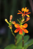 Όμορφη χλωρίδα λουλουδιών Στοκ Εικόνα
