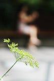 Όμορφη χλωρίδα λουλουδιών Στοκ Φωτογραφία