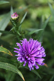 Όμορφη χλωρίδα λουλουδιών Στοκ φωτογραφία με δικαίωμα ελεύθερης χρήσης