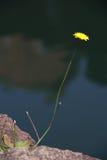 Όμορφη χλωρίδα λουλουδιών Στοκ Εικόνες