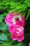 Όμορφη χλωρίδα λουλουδιών Στοκ εικόνες με δικαίωμα ελεύθερης χρήσης