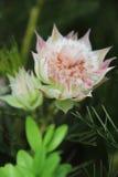Όμορφη χλωρίδα λουλουδιών Στοκ Φωτογραφίες